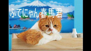 【ふてにゃん】タレント猫の春馬くんとツーショット記念撮影